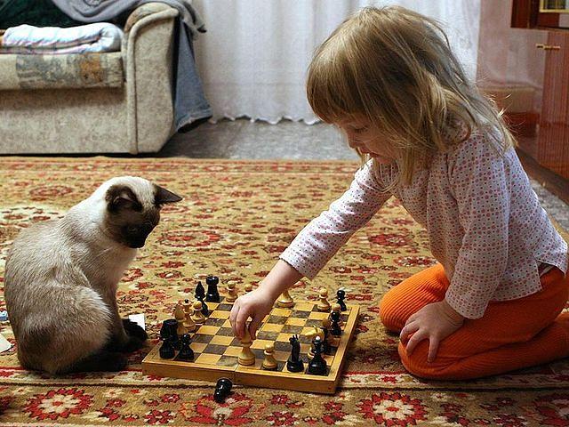 шахматы с кошкой